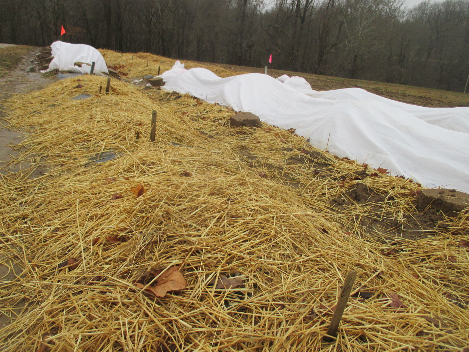 Strawberry Winter Protection Straw Mulch Vs Row Covers