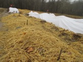 straw and row covers