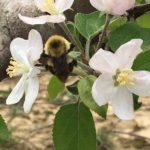 Engelbrecht's Countryside Orchard, Evansville