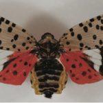 pretty colored moth