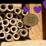 Figure 1. A mason bee, peeking out from her stem nest in my backyard bee house. Photo: E. Y. Long
