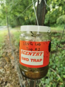 Figure 4. A commercial Scentry Spotted-wing Drosophila trap in the field, with many small flies attracted to the side of the trap. Photo: Zihan Hong.